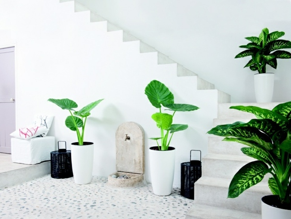 Feng Shui Interior With Plants